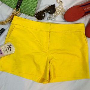 ANN TAYLOR LOFT Riviera Shorts stretch 10 NWT